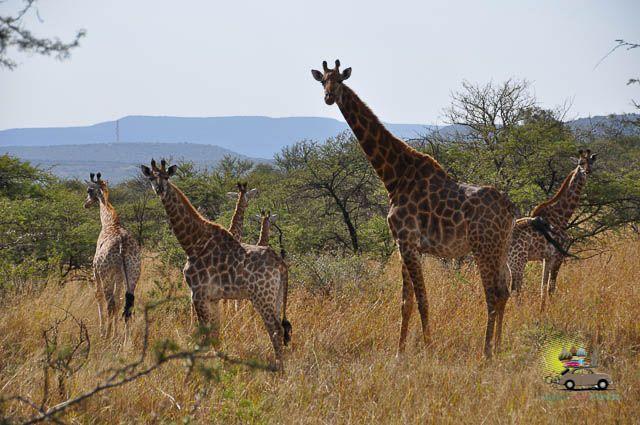 Safári em Drakensberg