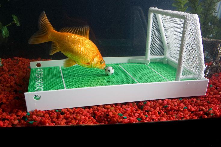 Amazon.com : R2 Fish School Complete Fish Training Kit : Science Kit : Pet Supplies