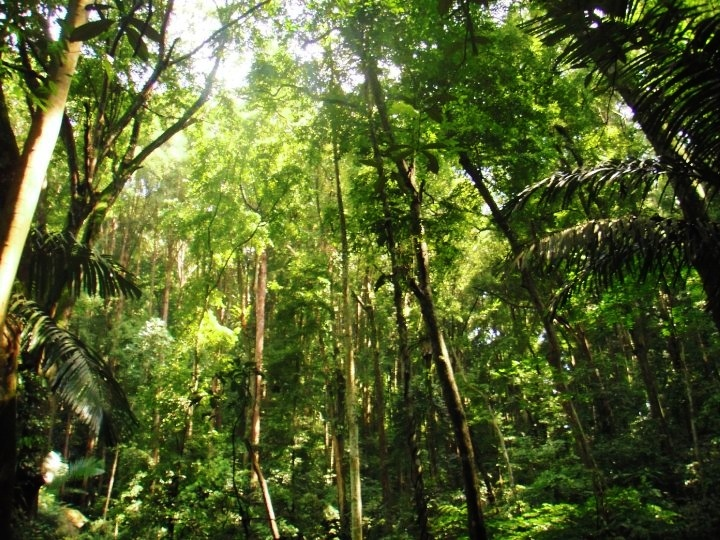 Beautiful rainforest at Fraser's Hill, Malaysia