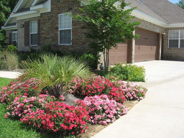 Red & Pink Drift roses in landscape