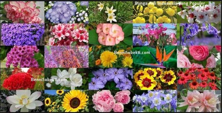 Gambar Bunga Hias Taman Bunga Hias Asli Indonesia Untuk Taman Paling Populer Bennisobekti Com 6 Jenis Tanaman Hias Bunga Untuk Mem Bunga Daylily Bunga Ungu