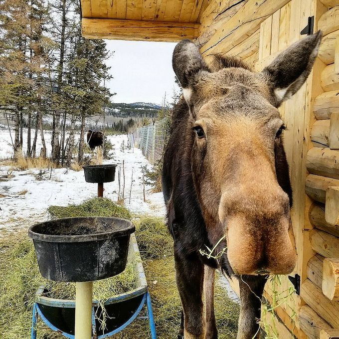 A Winter Holiday in the Yukon - Why You Need to Go