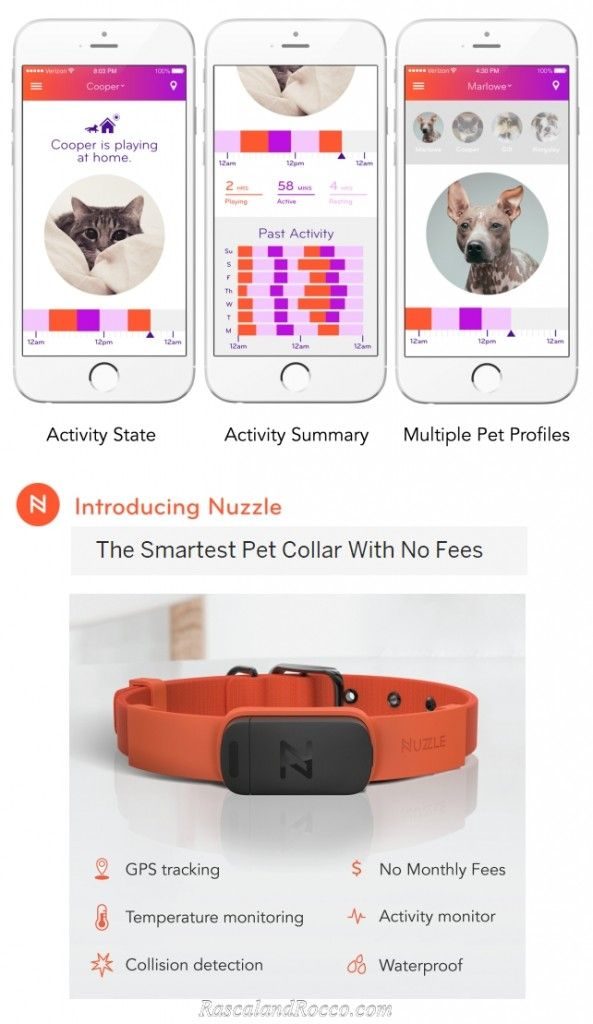 How would you find your dog if he got out? Help get Nuzzle GPS Collars in stores #NuzzleSmartCollar tracking collar for dogs and cats @HelloNuzzle