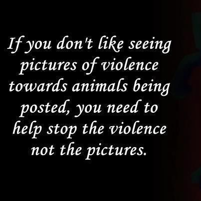 ...again...people need to see this!!!  Do something!  You should get angry and do something about animal abuse and neglect instead of reporting this to Pinterest and having it removed. When you take photos of reality away from the human eye, you are a willing participant in the involvement of it, allowing people to turn a blind eye to the evil action. You should use your sensitivity in a more productive way...: Animal Rescue, Vegan Inspiration, Veggies Life, Animal Quotes, Vegan Life, Animal Abuse, Make A Difference, Go Vegan, Helpful