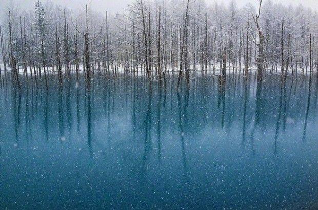 Lieu magique, presque irréel, ce lac bleu situé sur l'île japonaise d'Hokkaido a été immortalisé par le photographe spécialisé dans la photo de paysage, Kent Shiraishi.  Selon le photographe, qui a fait un pèlerinage jusqu'à nord du Japon le mois dernier pour prendre ces clichés, l'eau contient un niveau élevé de d'hydroxyde d'aluminium, ce qui reflète la lumière bleue