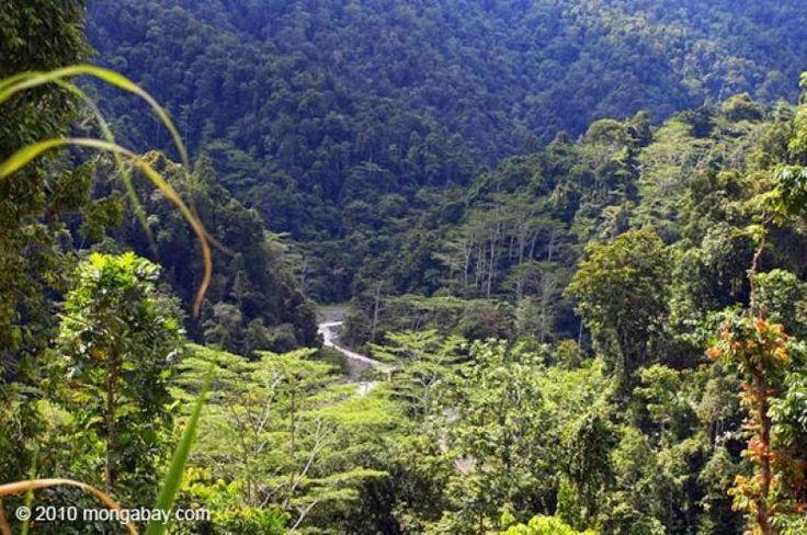 Mohon Bantuan untuk Mengisi Petisi Berikut  KONFRONTASI - Mohon bantuan untuk mengisi petisi berikut sekaligus menyebarkannya sebagai sikap penolakan atas akan dibabatnya hutan di lereng gunung Slamet seluas 24.660 hektar oleh korporasi asing  https://www.change.org/p/jokowi-pencabutan-izin-proyek-geothermal-pt-sae...  terimakasih atas partisipasinya    Gunung Slamet adalah gunung tertinggi di Jawa Tengah yang memiliki hutan tropis alami terakhir di Pulau Jawa ini Berbagai flora dan fauna…