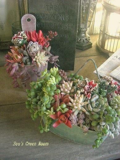 Succulents in 2 arrangements.
