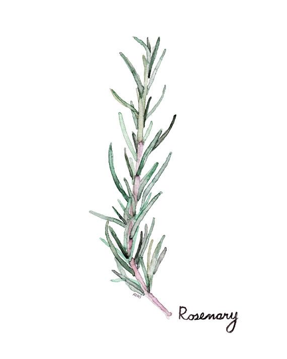 "Rosemary Herb Painting - Print from my Original Watercolor Painting, ""Rosemary"", Kitchen Decor, Green Herb, Botanical"
