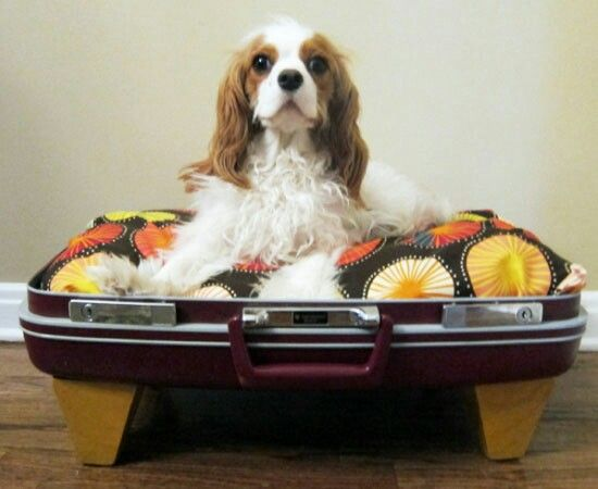 Best 25  Suitcase dog beds ideas on Pinterest   Doggie beds ...