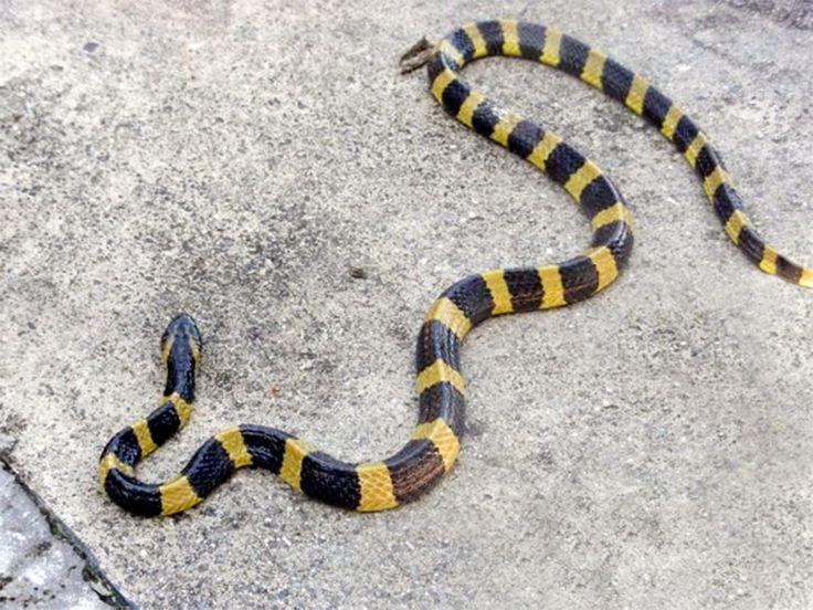 Marat Longri Wildlife Sanctuary - in Assam, India
