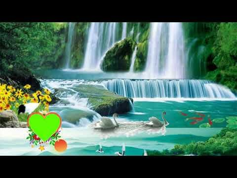 Hochzeit Greenscreen-Effekt Hintergrund Greenscreen-Hart-Effekt My Green Vfx & A …   – video EW