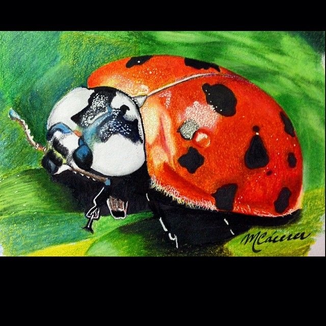 Realistic ladybug drawing - photo#38