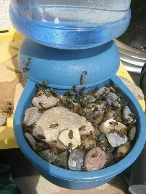 Use a dog/cat automatic water bowl and place pebbles or decorative stones in the bowl to give bees a safe place to land so they don't drown trying to drink.