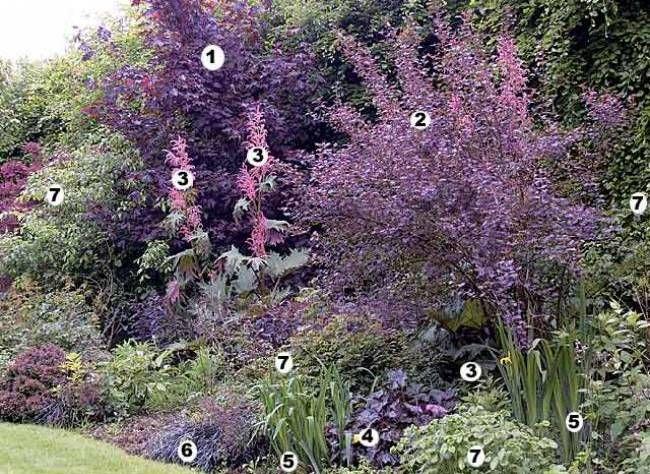 Scènes fleuries sans entretien : devant un mur de feuillage, un rideau rose-pourpré