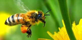 HELP THE BEES! How To Attract Bees In Your Organic Garden