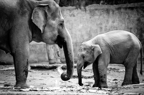 Mother and child...I am obsessed with 'phants.