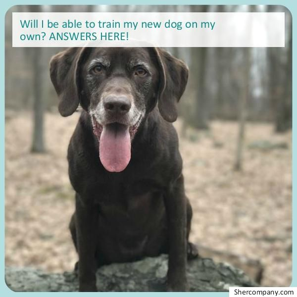 Dog Training Questions Check Out The Image For Various Dog
