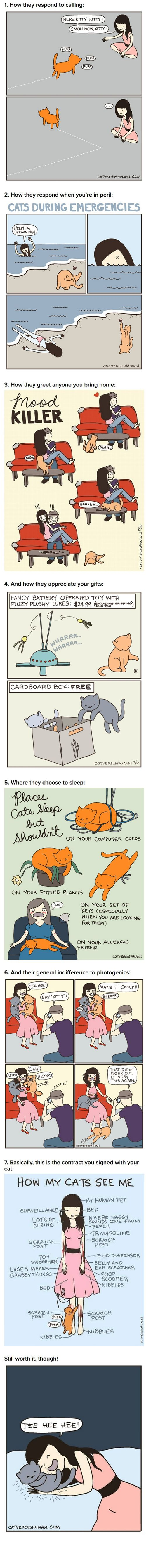 It's like Cat Vs. Human: The King-Sized Version! Drink in the cat toons! (Cat Vs. Human)