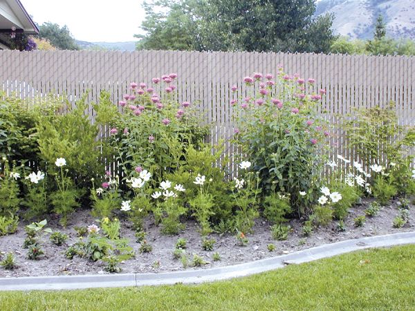 Products Chain Link Fence Garden Fenced In Yard