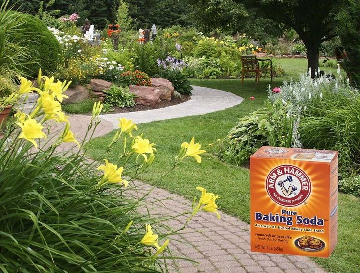 baking soda hack for garden