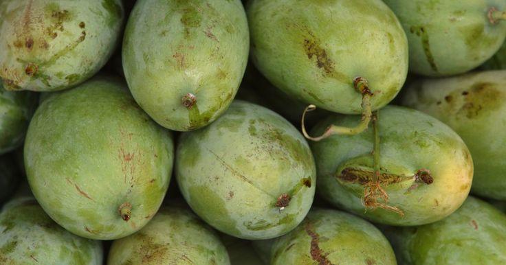 ¿Puedo cultivar una planta de mango como una planta doméstica?. El árbol de mango tropical produce un fruto delicioso, disfrutado por muchas personas que viven bien lejos de la zona del clima nativo del mango. Con un poco de cuidado, puedes cultivar mango de interiores, incluso sin el calor y la plenitud del brillo de sol que la planta requiere normalmente. La clave es mantener el suelo, la humedad y la luz ...