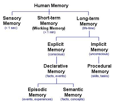 human memory diagram by luke mastin what we usually think