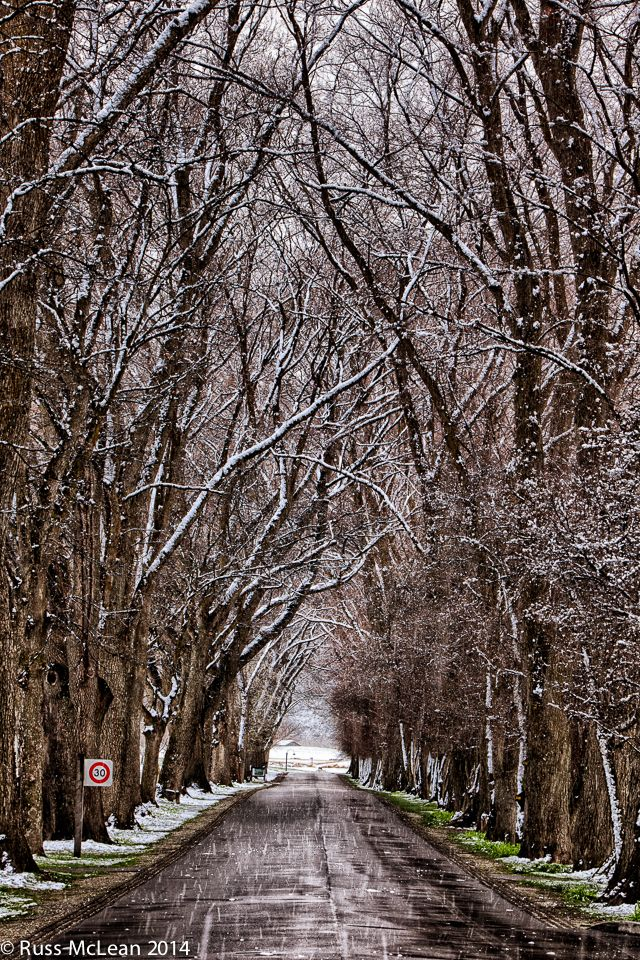 """""""Winter Avenue"""" – Milbrook Resort, Arrowtown. Millbrook Resort, Queenstown is one of the leading golf & lifestyle resorts in Australasia. Whatever the season, the Millbrook Avenue welcomes visitors with an 'aged grandeur' seldom seen anywhere else in NZ."""