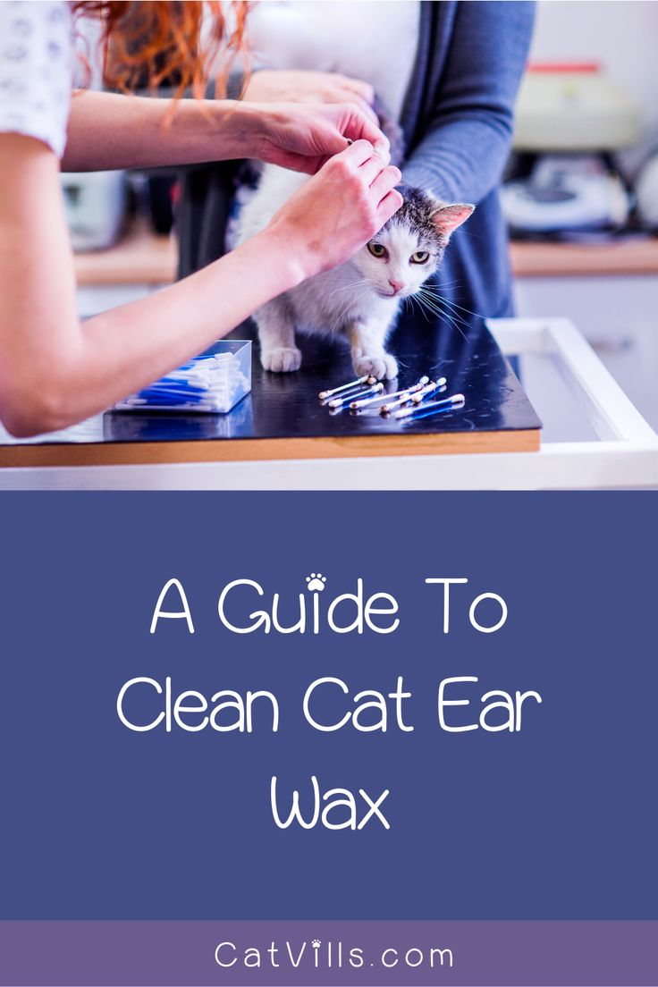 how to clean cat's ears