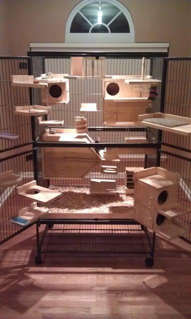 Best 20 Ferret Cage Ideas On Pinterest