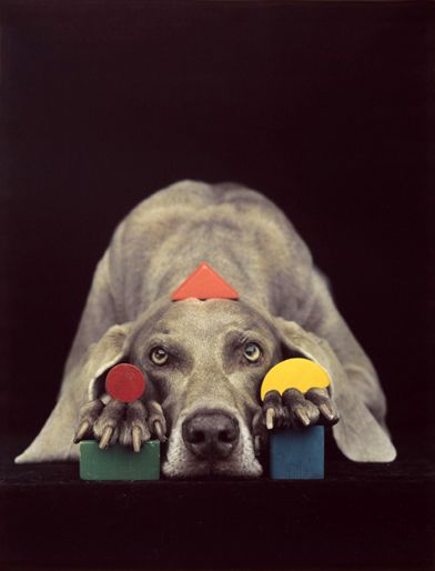 Things that Quicken the Heart: Animals in Art - William Wegman, Weimaraner