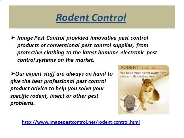 Rodent Control in Bangalore by Imagepest Control