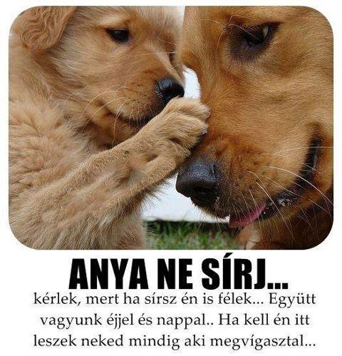 Anya ne sírj... kérlek, mert ha sírsz én is félek... Együtt vagyunk éjjel és nappal... Ha kell, én itt leszek mindig, aki megvigasztal...