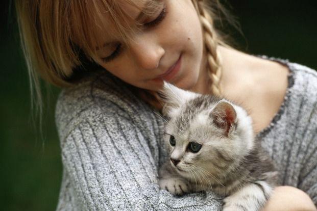 Top 10 Cat Breeds for Kids - Pet360 Pet Parenting Simplified