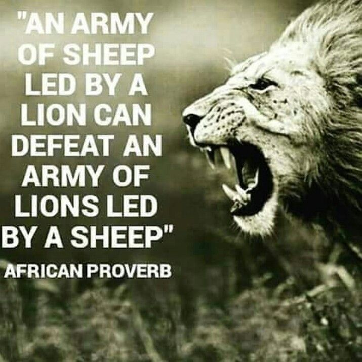 The importance of leadership...striving to be a lion - metaphorically speaking Visit http://iamroboneill.com/ to learn how to build an online business