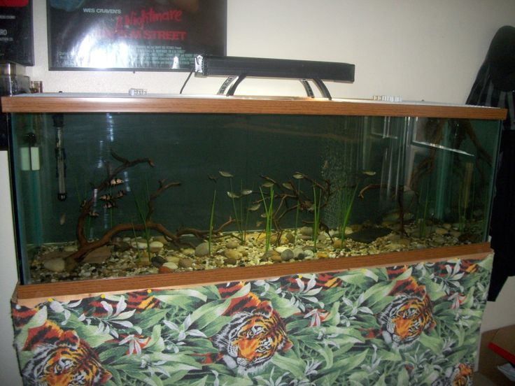 Unique Aquarium Stands Ideas ~ http://www.lookmyhomes.com/creative-aquarium-decoration-ideas/