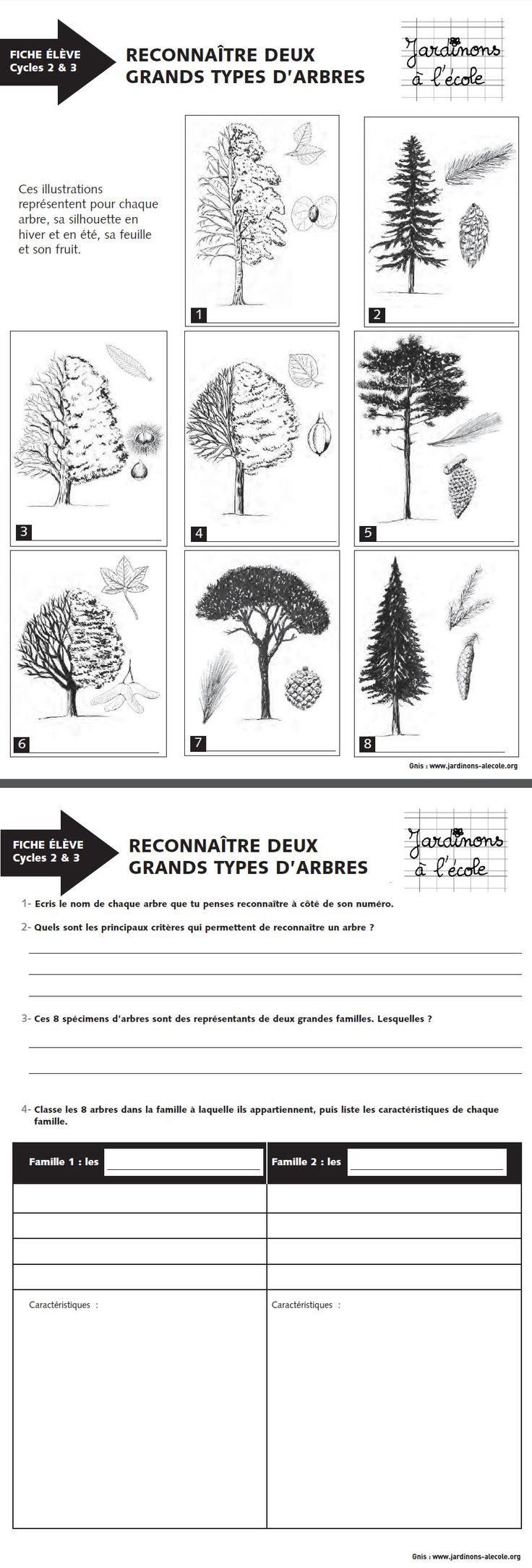 best 25 reconnaitre les arbres ideas on pinterest les arbres la science des plantes and. Black Bedroom Furniture Sets. Home Design Ideas