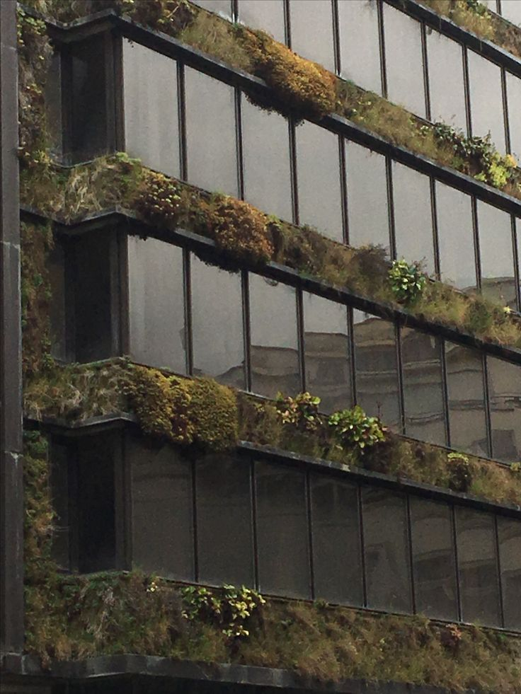 Cool plant detail facade. Rue Belliard, Brussels