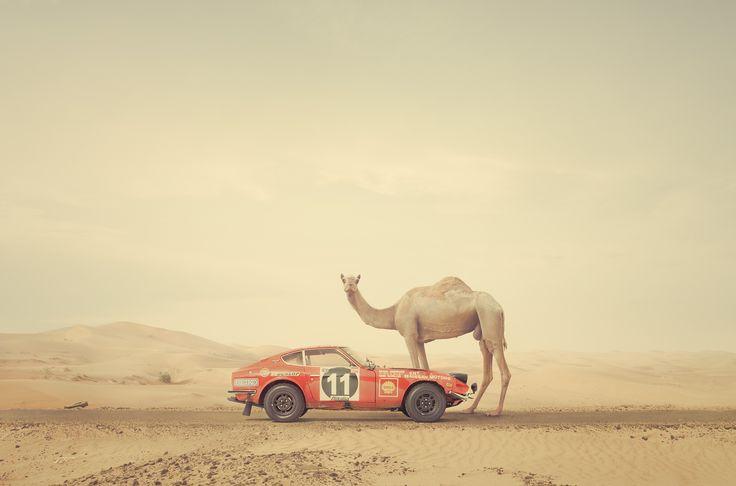 Nissan 240Z, Rally Car, Rally Car Racing, Datsun 240z, 240Z, Vintage Race Car