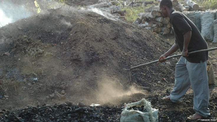 Making charcoal from Liberian rubber trees 2