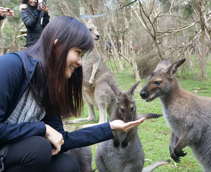 Hey #kangaroo! You're lovely!