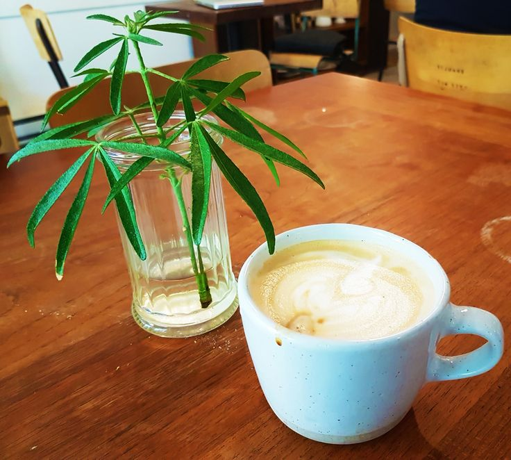 Nosh and Nibble - Nelson the Seagull - House-Made Bread Cafe Review - Vancouver…