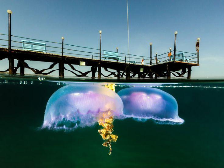 10 уникальных полуподводных фотографий  Медуза у пирса в египетском курортном городе Нувейба.