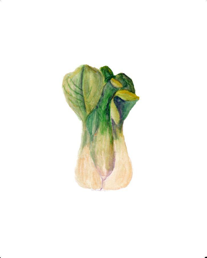 Bok Choy, Watercolor Painting, Vegetable Art Print, Gardening Art, Gardener Print, Vegetable Art, Food Art, 8X10 printable, Kitchen print by OrangePeelPaperie on Etsy