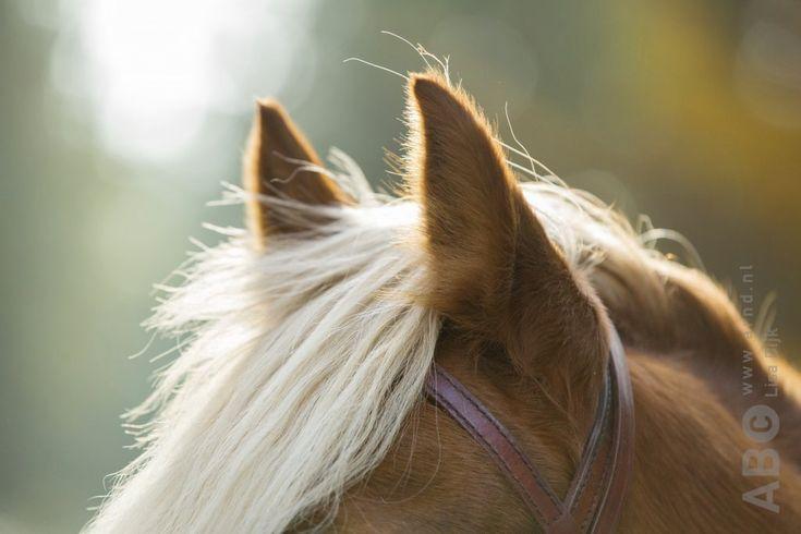 Goed kunnen luisteren naar je paard is een belangrijkonderdeel van het trainen en houden van paarden.Ruiters die de signalen van het paard niet oppikken,