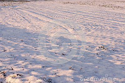 Photo of a field covered by snow under late afternoon light