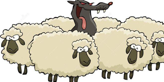 Le pecorelle unite ed il lupo solitario