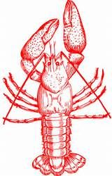 crawfish clip art free - Yahoo Image Search Results