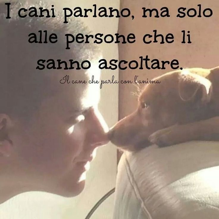 ii cani parlano dogs talk #cani #dogs