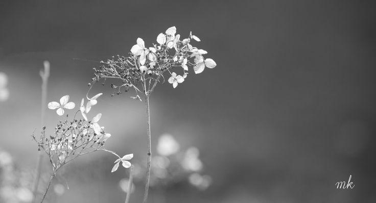 #flowers #blackandwhite #photographie