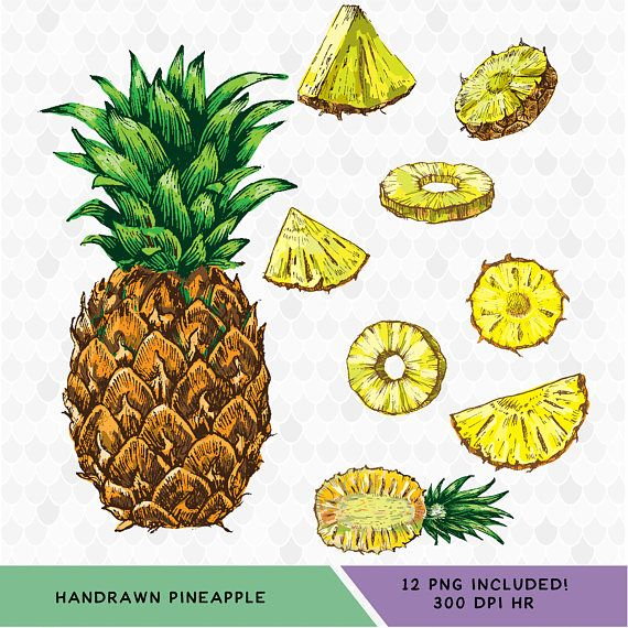 Hand-drawn Pineapple Clipart, All PNG Files come separated, together and in black and white to make it truly your own! Can be scaled bigger or smaller.  Perfect For:  Digital Scrapbooking Framed Art Prints Websites Party Supplies Cards Invitations Stationary Custom Gifts Creating your own Fabric  THE POSSIBILITIES ARE ENDLESS! What you will get with this Purchase:  >> An Instant Download file directly after your purchase. >> PNG Files are all separated and transparent  For persona...